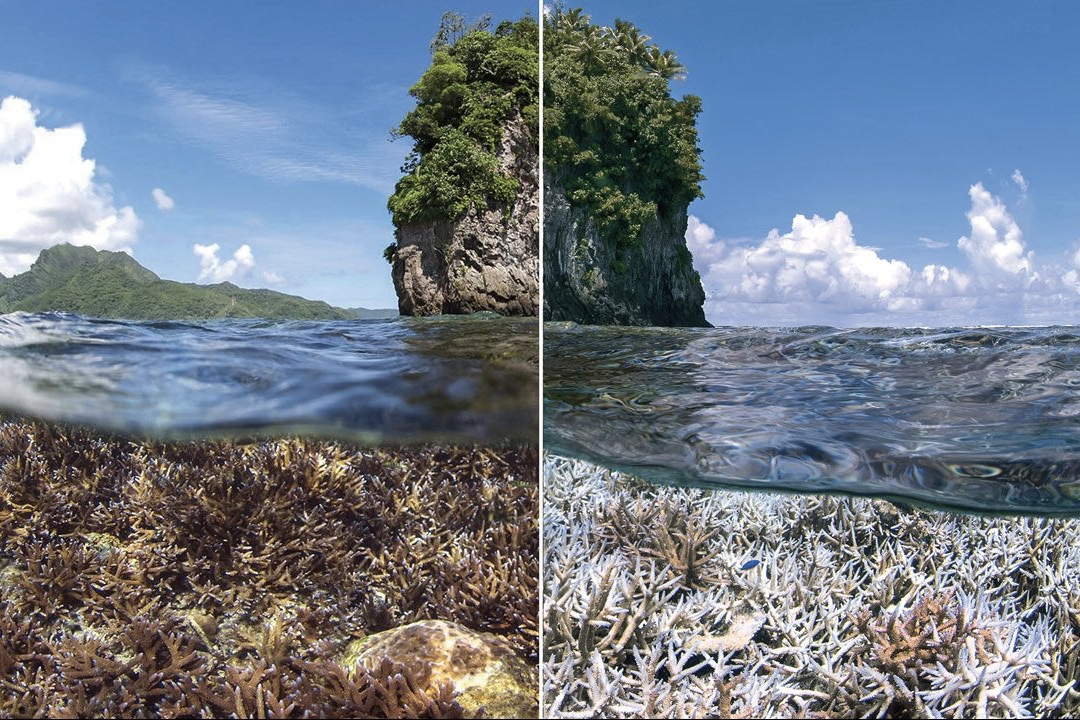 Chasing Coral,NewsFeeds,Coral Bleaching ,Climate Change,Coral Reefs,Marine Life,Global  Warming,