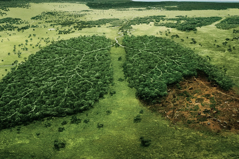 earth,environment,Carbon Sink,Nasa,Tentree,Oxygen,Greenhouse Gases,Deforestation,rainforests,
