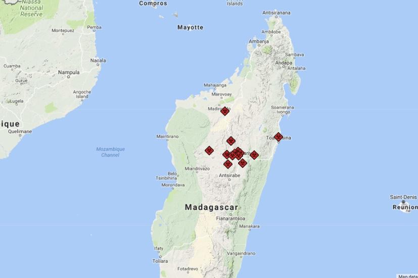 Madagascar,Plague,pneumonic,rodent,World Health Organization,Newsfeeds24,News,Breaking News,