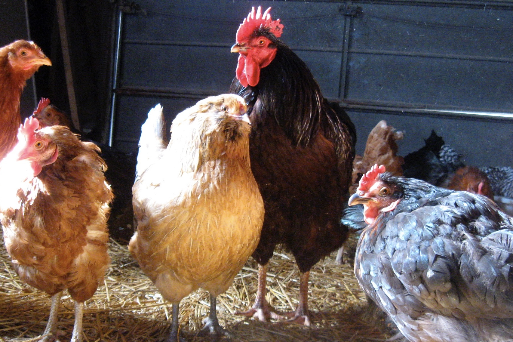 No New Reports On The Bird Flu Cases In Western Cape 1
