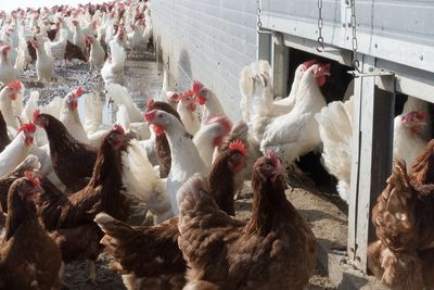 Bird Flu Rises, Which Means Bad News For Eggs