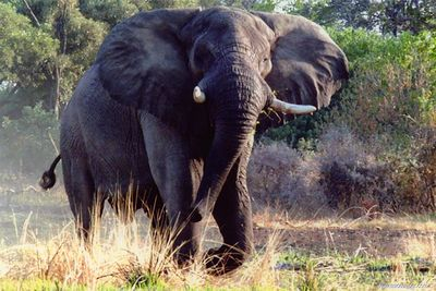 Elephant Tramples German Tourist To Death In Zimbabwe