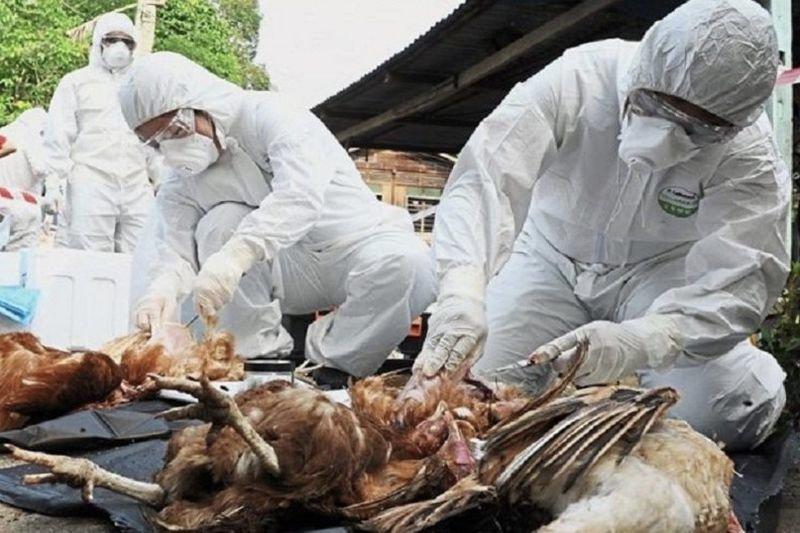 Bird Flu Is Costing Gauteng Farmers R65m 1