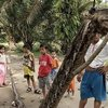 newsfeeds24,newsfeeds24.com,news,general news,Indonesians,Indonesia,giant,python ,snake ,reptile ,eaten,Robert Nababan ,Nababan ,security guard,injuries ,Detik,police,Elinaryon ,medicine ,healing,